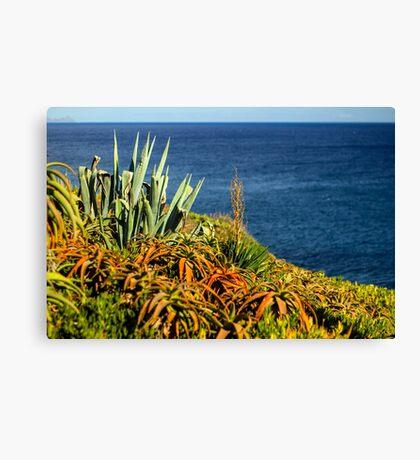Cypress Sea Coast - Nature Photography Canvas Print