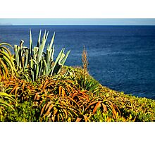 Cypress Sea Coast - Nature Photography Photographic Print