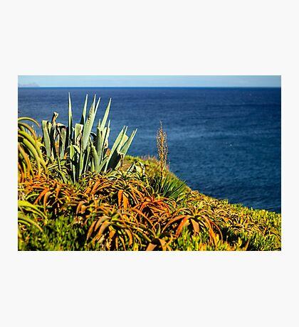 Cypress Sea Coast - Nature Photography Photographic Print