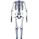 skeleton, xray, cartoon, funny by bbswedge