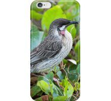 Red Wattle Bird and Ground Cover iPhone Case/Skin