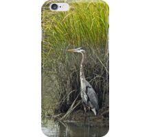 Great Blue Heron - Ardea herodias iPhone Case/Skin