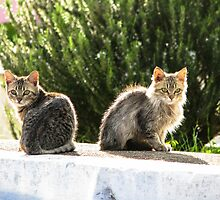 Kittens enjoy Greek Sun by digitalplaces