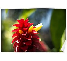 Crazy Flower - Nature Photography Poster