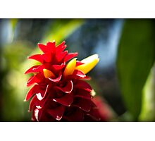 Crazy Flower - Nature Photography Photographic Print