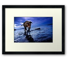 Frolicking Framed Print