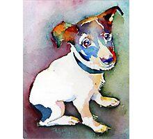 Tiny Pup Photographic Print
