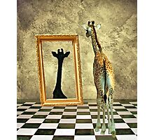 Giraffe Dreams Photographic Print
