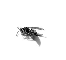 wasp 05 by andley