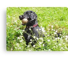 My Ball, I'm Wet and I like it! Canvas Print
