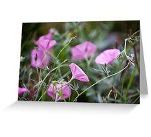 Pink Bindweeds in a field Greeting Card