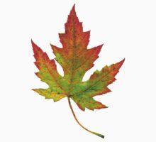 autumn leaf  by ghjura