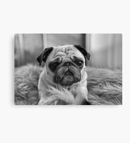 Black and White Pug Canvas Print