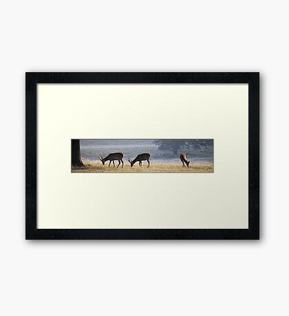Tatton Deer  Framed Print