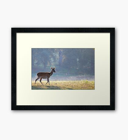 Tatton Fawn Framed Print