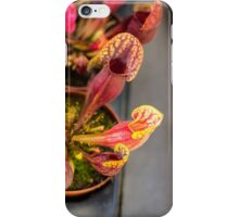 Fly Catcher - Nature Photography iPhone Case/Skin