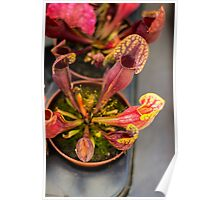 Fly Catcher - Nature Photography Poster