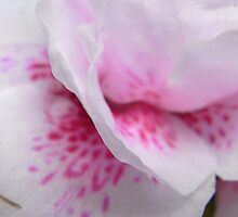 azalea IV by Floralynne