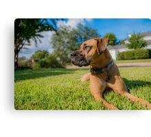Guardian of the Front Yard Canvas Print