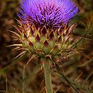 1177 Prickly Beauty by DavidsArt