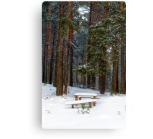 bench in winter forest Canvas Print