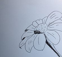 Black and White Daisy by TheKatydid