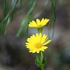 Itsy bitsy teeny weeny yellow by WalnutHill