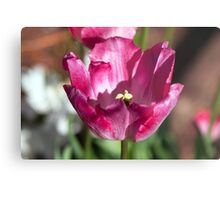 Tulip Close-Up Metal Print