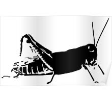 Young Grasshopper Poster