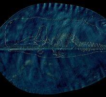 Inverted Whale by Alephredo Muñoz