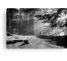 Winter Light in the Woods... Canvas Print