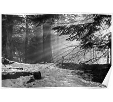 Winter Light in the Woods... Poster