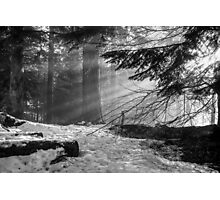Winter Light in the Woods... Photographic Print