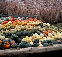 ( º.º ) Gourds Fall Harvest ~ A Sure Sign Of Fall ( º.º ) by ✿✿ Bonita ✿✿ ђєℓℓσ
