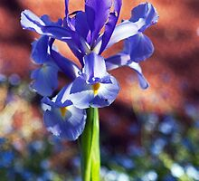 Iris and Forget-Me-Not Bokeh by jayneeldred
