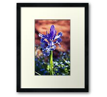 Iris and Forget-Me-Not Bokeh Framed Print