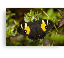 Sword Grass Brown Butterfly Canvas Print