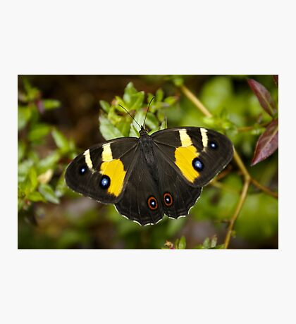 Sword Grass Brown Butterfly Photographic Print