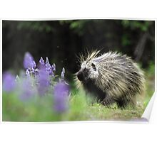 Porcupine in Lupin Poster