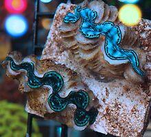 Coco Islands Maxima Clams by Ben Goldberg