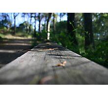 Bush Trail Photographic Print