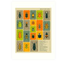 COMMON BEETLES OF NORTH AMERICA Art Print