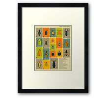 COMMON BEETLES OF NORTH AMERICA Framed Print