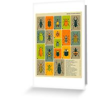 COMMON BEETLES OF NORTH AMERICA Greeting Card