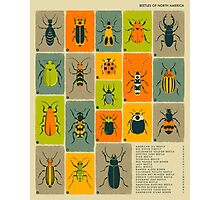 COMMON BEETLES OF NORTH AMERICA Photographic Print