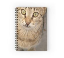 Eye Contact With A Stray Tabby Cat Spiral Notebook