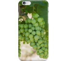 grape and vineyard in spring iPhone Case/Skin