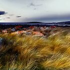 Windswept strait by Claire Walsh