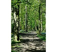 Woodland Walk Photographic Print