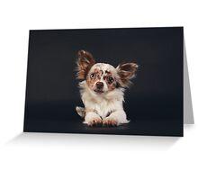 Chihuahua - Red merle on black / dog blue eye odd longhair cute bff friend tiny dog Greeting Card